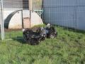 Black Mottled orpington chicken img_3880